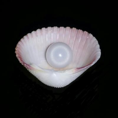 Clam Pearl 2.8 ct Round 7mm