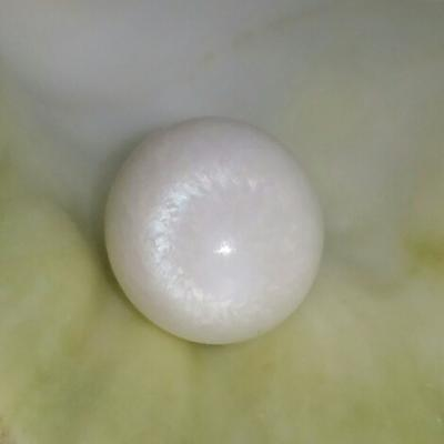 Clam Pearl 21.3 ct