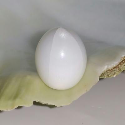 Clam Pearl 27.55 ct