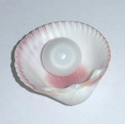 Clam Pearl 7.45 ct with Strong Flame