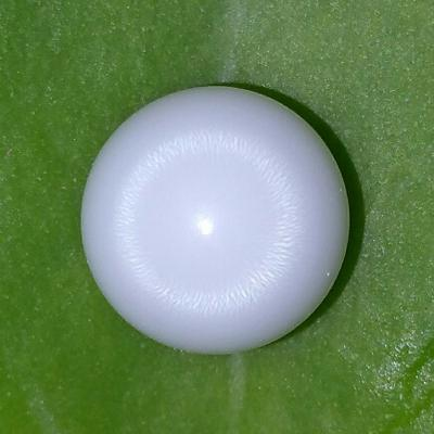Clam Pearl Button 5.05 ct with Flame