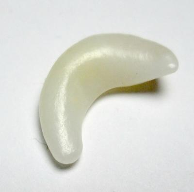 Clam Pearl Curved 19mm Yellowish