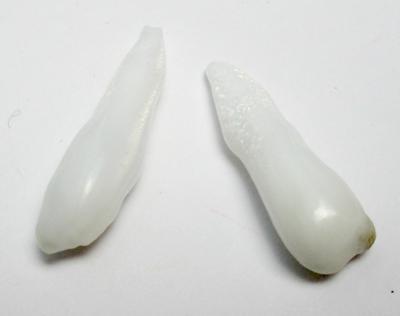Clam Pearl Pair Drop Shaped 18+ carats 27+mm