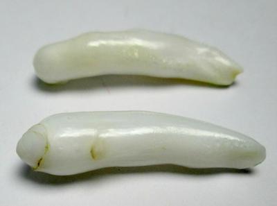 Clam Pearl Pair Long Baroque Drops 18+mm