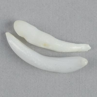 Clam Pearl Spike Pair 24-26mm