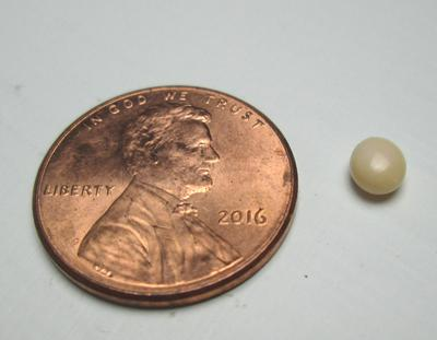 Conch Pearl Beige Button 5mm