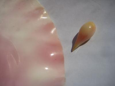 7.66 carats Natural Conch Pearl Drop Shape