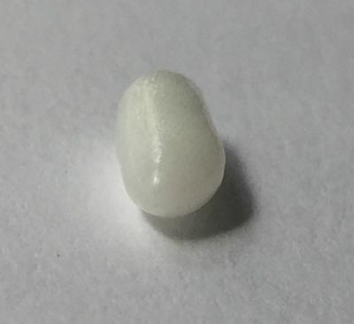 Cylinder Shaped Clam Pearl - 1.60 carat