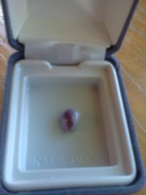Purple quahog pearl