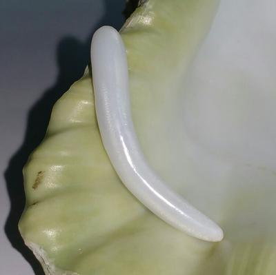 Elongated Clam Pearl 10.4 ct