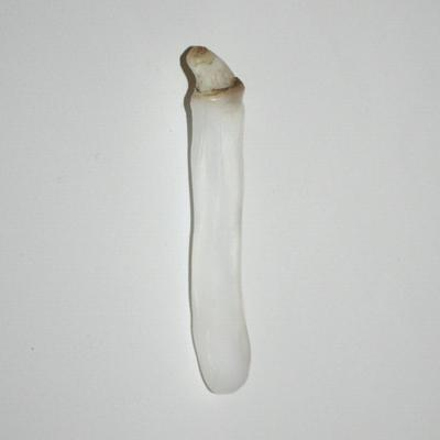 Elongated Clam Pearl 63.4 ct 73.74mm in Length
