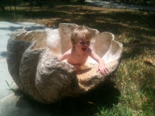 Giant Clam Shell for Sale
