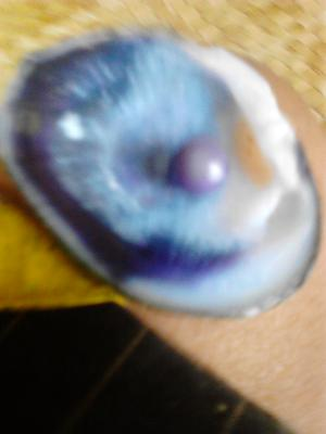 Freshwater Pearl in Shell