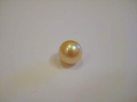 Gulf Pearl