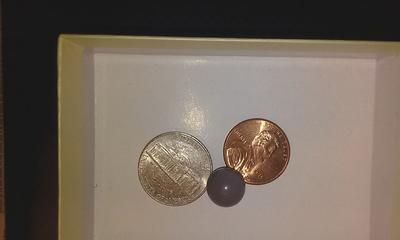 Quahog pearl 11-12 cm