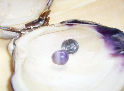 25.67ct Purple Quahog Pearl