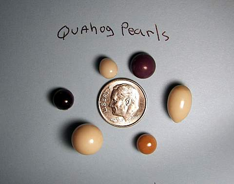 John's quahog pearls with dime