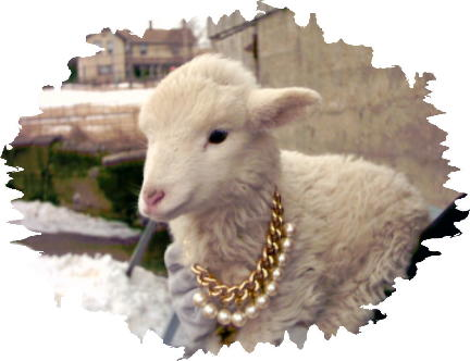 Lamb pearls and gold chain