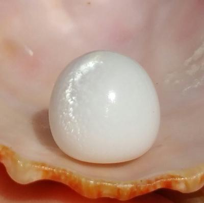Magnificent Clam Pearl of 22.25 ct