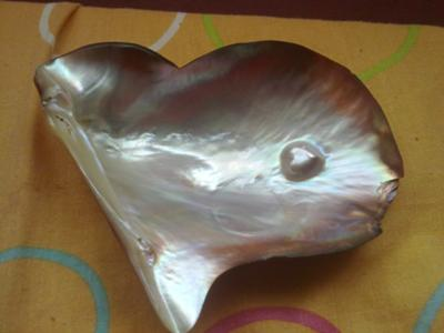 heart shaped natural blister pearl