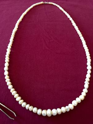 Natural Persian Gulf Pearl