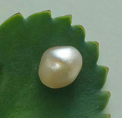 Saltwater natural Pearl
