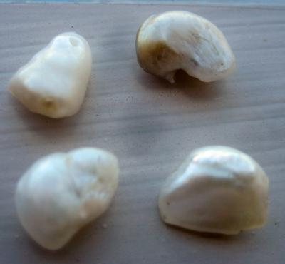 Natural USA Freshwater Pearls - Group of 4