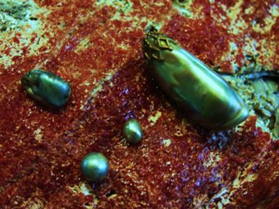 Abalone Pearl Treasure