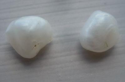 Pair Baroque Natural USA Freshwater Pearls