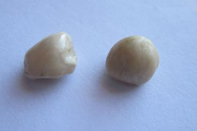 Pair Beige Scallop Pearls Almost 5ct Total