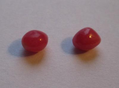 Pair Dark Pink Conch Pearls