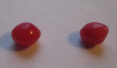 Pair Dark Pink Conch Pearls