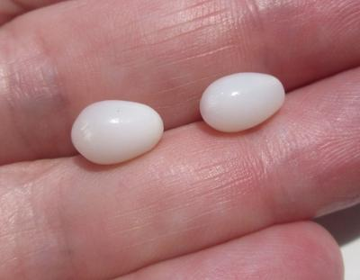 Pair of Clam Pearl Drops with Flame 5+ carats 9mm