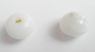 Pair of Clam Pearls with Flame for Sale