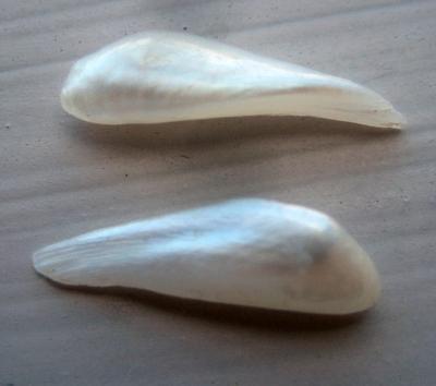 Pair Wing Natural USA Pearls 14mm