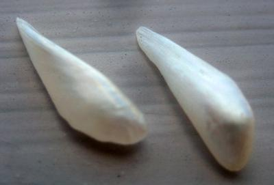 Pair Wing Natural USA Pearls