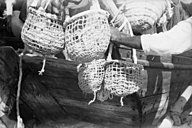 Diver's baskets filled with oysters
