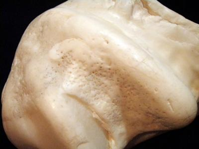 5.5kg giant clam pearl