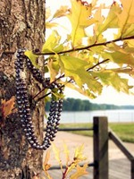 Pearls on Maple by Mississippi River