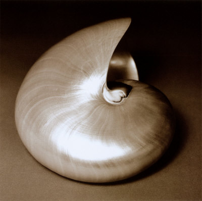 pearly chambered nautilus