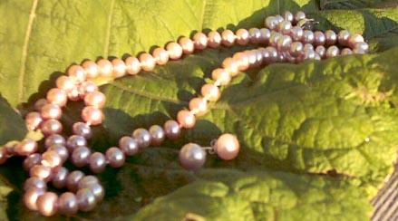 pink paerls on rhubarb