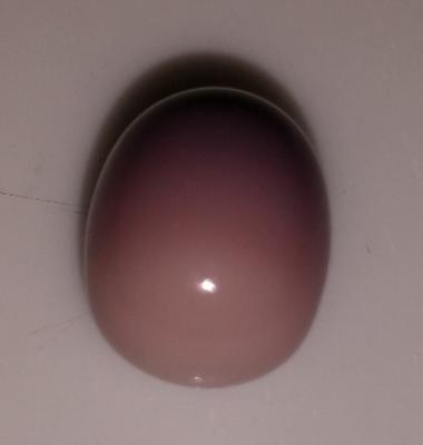 Quahog pearl - BBQ find