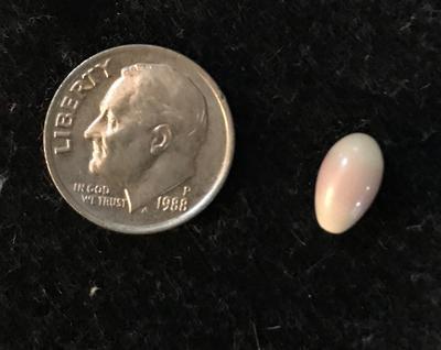 Quahog Pearl Found