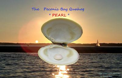 Quahog pearl found in Peconic Bay
