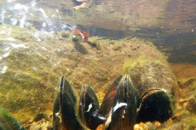 Photo: Ness and Beauly Fisheries Trust