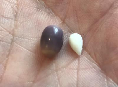 5.03 ct Quahog Pearl