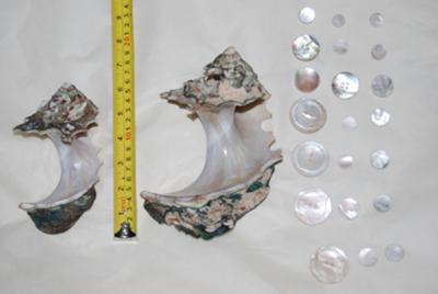 An example of our conch shells, buttons, and button blanks