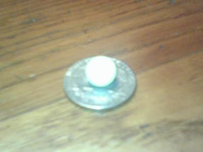 Quahog Pearl on Quarter