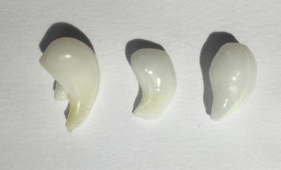 Three Curled Clam Pearls - 21.80 carats total