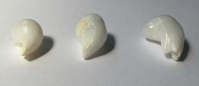 Three Curled Drop Clam Pearls - 33 carats
